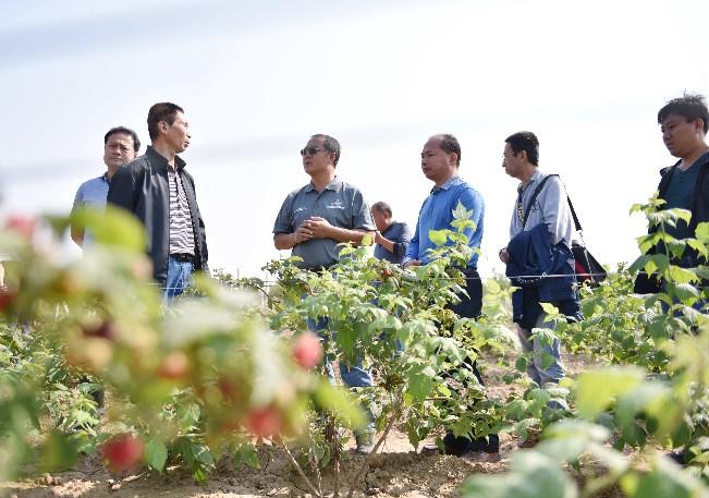 美籍华人高愉教授到天泰源农业公司指导树莓栽培技术