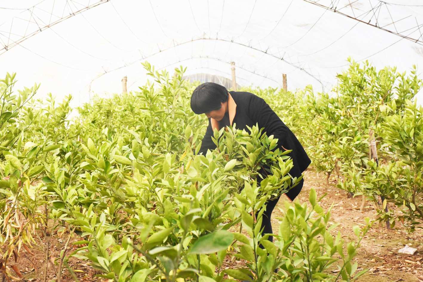 """东旺镇前营村兴坤农业发展有限公司大胆创新,尝试""""南果北种"""""""