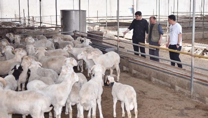 河北中科定洋农业科技有限公司肉品销售范围已经覆盖北京各大农贸市场及超市