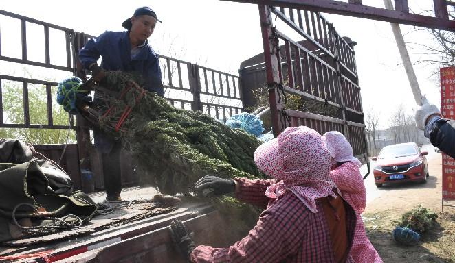 大辛庄镇着力发展现代生态农业,进一步做优做大苗木花卉产业