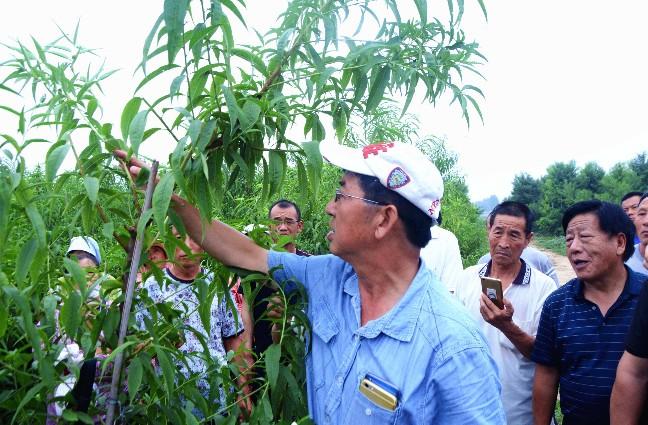 德胜农林集团公司在留早镇留园水蜜桃种植基地举行桃产业夏季管理培训