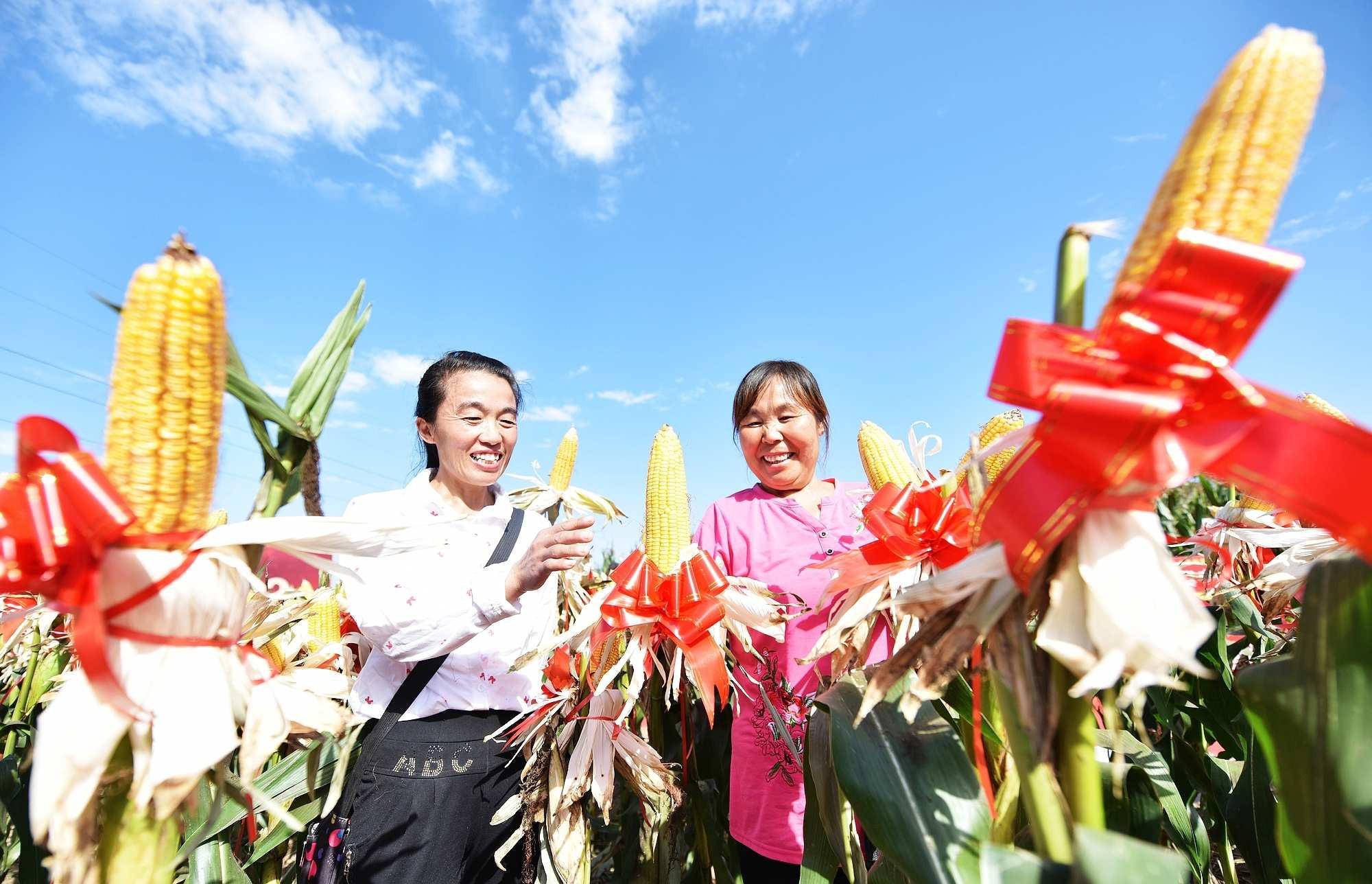 市光耀农业集团组织举办2019年度玉米品种观摩会