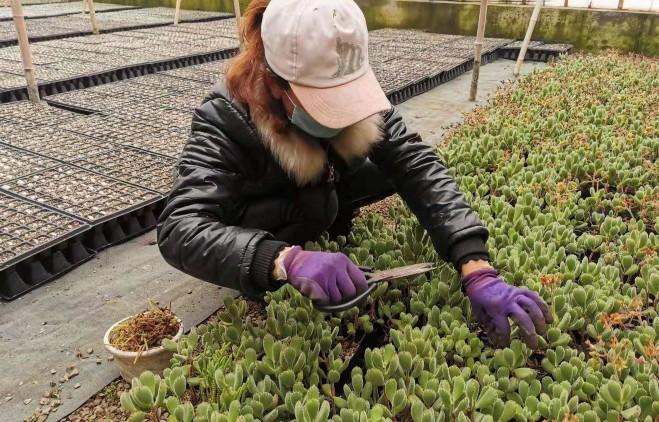 定州市绿农花卉有限公司产品销往多个省市