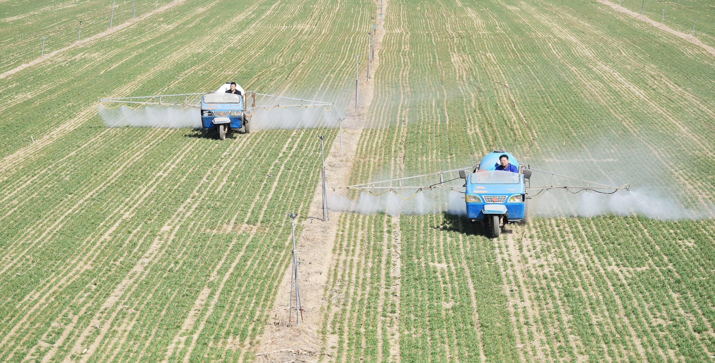东留春乡北邵村做好疫情防控同对1200多亩黑小麦喷洒离子钙
