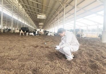 """河北首农现代农业园区农业及服务模块经理于向前 当好牧场的""""牛保姆"""""""