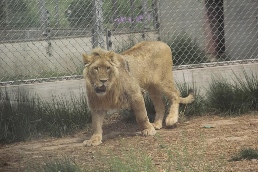 东胜动物园