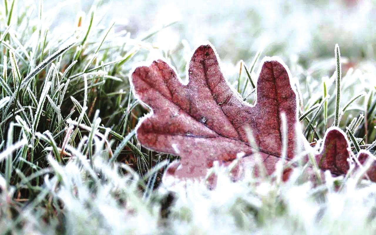 霜来秋色浓