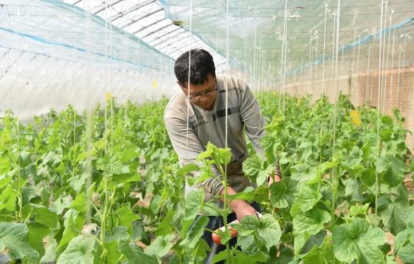 市富元农业科技有限公司积极开展春耕农业生产